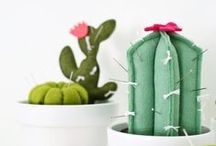 cacti / It's a cactus extravaganza up in here.