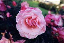 blooming / flowers