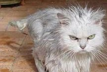 Funny Wet Cats / Cats do not like taking a bath. However, sometimes us horrible humans have to give them a cleaning.