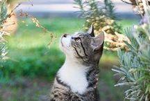 Domestic Shorthair Cats / Domestic shorthair cats are beautiful.