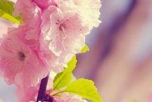 Spring & Summer light - Lumière de printemps, été