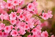 Flores, jardins e afins
