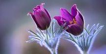 Flowers forever