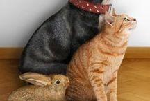 Animalitos tiernos / Diversos animalitos