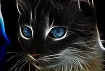Pinturas ( de gaticos) / Pinturas de gaticos