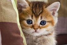 Cats & Kittens 2 / by Terri Hafiz-Fetter