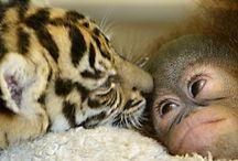Animali / Caricate sempre dei pin (riguardanti gli animali) e invitate altri pinner a far parte di questa bacheca!