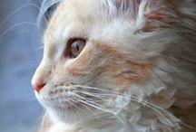 Cats & Kittens 3 / by Terri Hafiz-Fetter