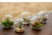 Terrariums & Decorative Plants