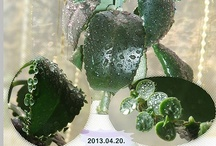 VM: Succulents