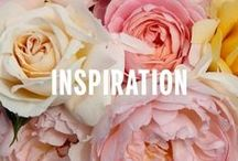 Inspiration / by Betsey Johnson