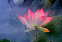 In a perfumed garden