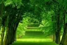 peaceful avenues
