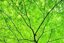green nature / silent walks (Sydney) - meetup.com/Bushwalkers-United-Silent-Harmony/