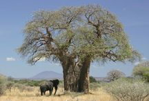 Southern African trees, animals & beautiful people / I experienced many happy flying hours across  Southern Africa