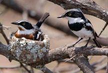 South African birds / My Mom was an avid birdwatcher and I still think of her when I spot a stunning bird:)