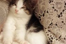 ♥ Animals - and Taking Care of Them ♥ / All things related to animals and how to take care of them