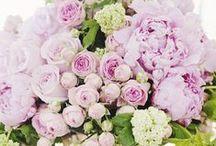 Kvety,kvety,kvety