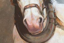konie horse / #horse