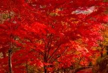 autumn / fall / when the colours of the leaves change and we are faced with the immense colour palette of our planet