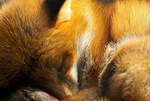 Dyr / I denne opslagstavle er der dyr jeg synes er flotte, seje eller nuttede. Der kan også være natur.