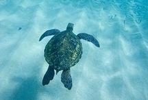 Turtles / by なら散策日記【鹿と亀と猫と犬の日々】