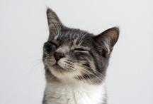 Cats / by なら散策日記【鹿と亀と猫と犬の日々】