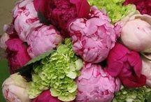 Flors de tots colors