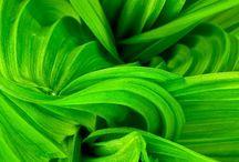 verd menta