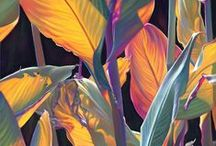 Tropical / Pattern Print Photography