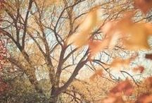 Autumn Capsule16