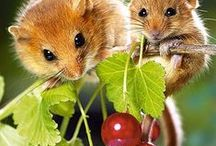 Mouses..