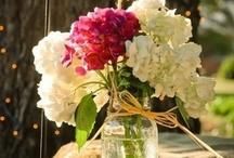 Cute Flowers / by Katt