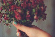 Bring me flowers ✿