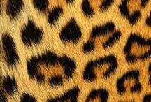 Sexy Leopard / Just love it!