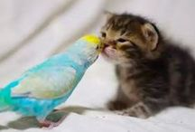 PET FRIENDS, LOVE