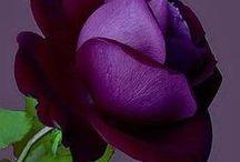 Purple :-)