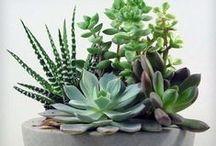 záhrada / garden / terrarium, plants, bonsai, succulents