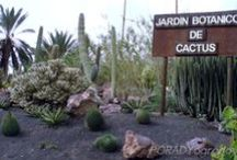 Botanical Garden in Fuertaventura / See the beautiful cacti and succulents in size XL. A visit to Europe's largest cactus garden. #cactus  #kaktus #agava #succulent