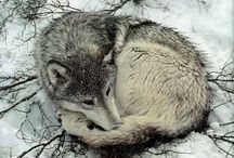 Wolves in nature and art