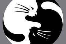 My Crazy Cat Heart / CATS!