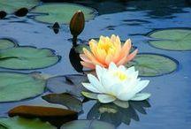 Spring Forward........... / The season of renewal - resurrection - and rain!