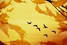 mevsimlerden sonbahar / sonbaharın güzelliği