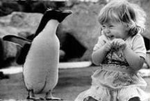 Animals & Pets - Penguins - My youngest son's fav / My mom collected elephants, I collected whales, my son has emerged a penguin lover! It's his 'thing'...what's yours?