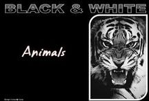 "B&W✿Animals ...& more / Welcome! You are all cordially invited to collaborate on this board. If you follow me and write simply ""Add me"", ONLY AT THIS URL: https://www.pinterest.com/hardysCorner7/last-minute/ , I'll send you an invitation, as soon as possible . Thanks to all contributors and followers for making this an superb board! Contributing is not obliged... You are free to invite your friends. Here, no rule, other than those of Pinterest...  Pinning what you want to, as much as you like  Admin✿Bernard"