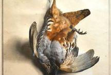 martwa natura ptaki /still life