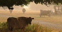 życie na wsi inspiracje