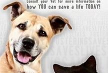 Volunteer, tutor, or foster for an animal rescue. / Please search Pinterest or Bing for:  Volunteer opportunities in your area.  Whether it is to help animals, children, homeless, schools, whomever.  Thank you for your willingness to volunteer. / by N. Sewell