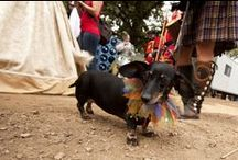 Pet Festival / Bring your Pet to the Festival and enjoy Pet Vendors, Wiener Dog Races and so much more!