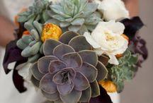|Succulent Love|